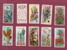igarette cards set Useful Plants  & fruits  1902 Opium Rice Tea
